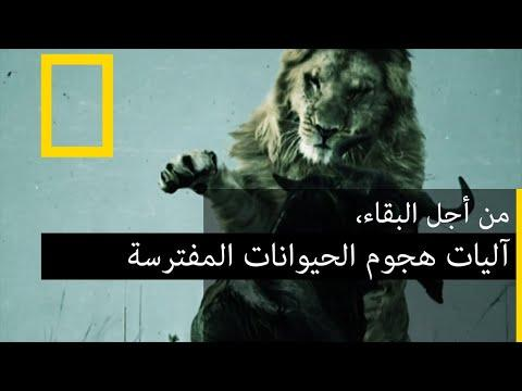 وثائقي - Documentary